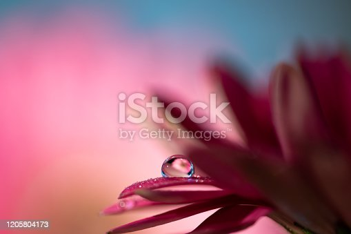 Vibrant violet and purple soft gerbera flower petals with water drops refraction macro relaxing abstract selective focus background