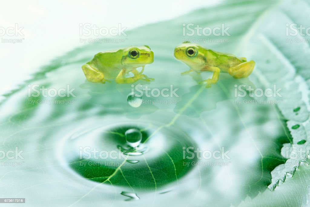 Water droplets and the frog! stock photo
