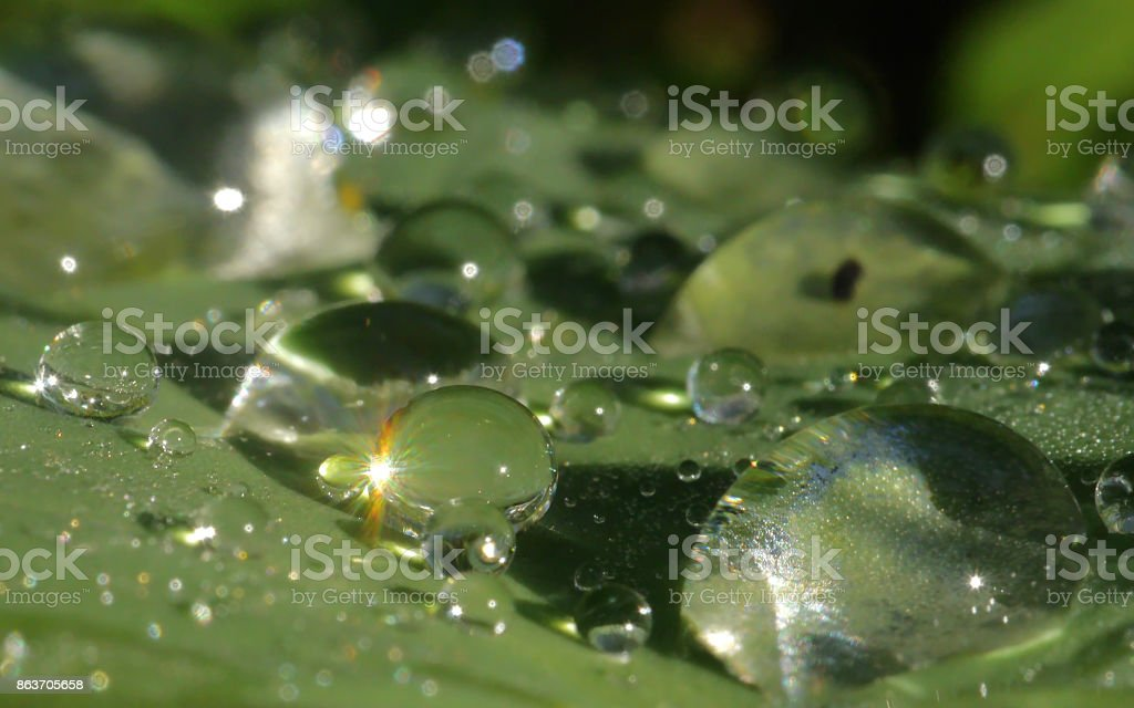 Water droplets glistening on green leaf stock photo