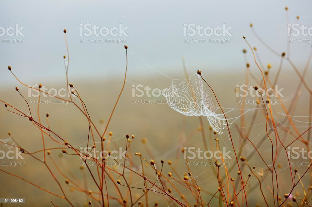 Water droplets on a spider web stock photo
