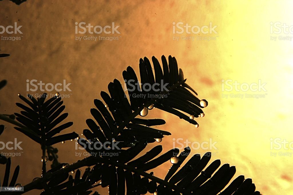 Water Droplets on Fern royalty-free stock photo