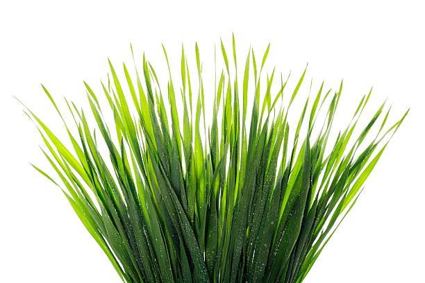 gocce d'acqua sull'erba - filo d'erba foto e immagini stock