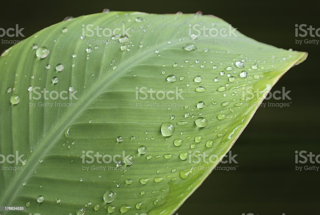 Water droplets on green leaves stock photo