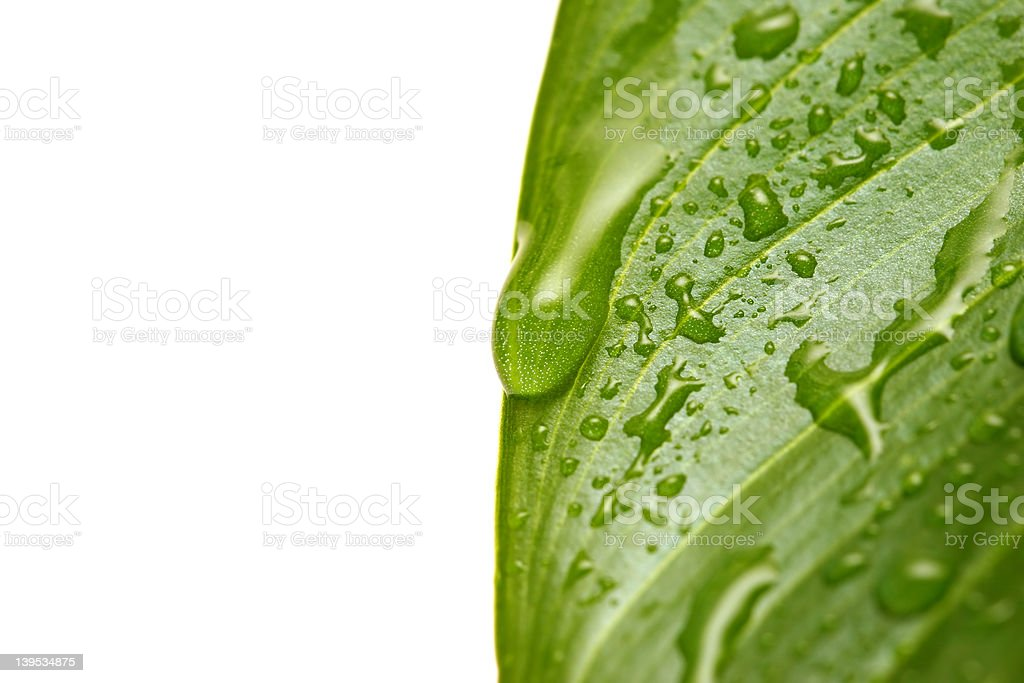 water droplets on leaf macro royalty-free stock photo