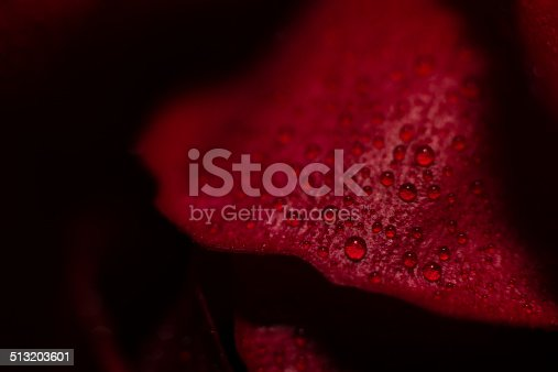 Water Droplets On Red Rose Petal