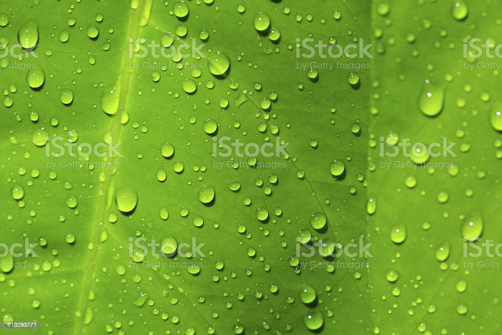 Water droplets on the leaves. stock photo