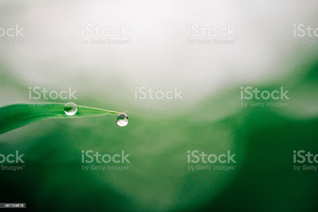 Water Droplets stock photo