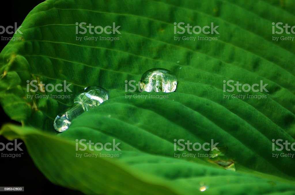 Water Droplets royalty-free stock photo
