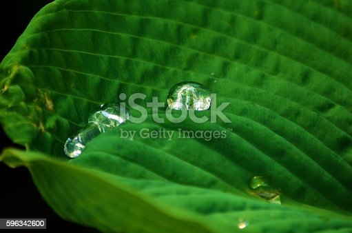 Water Droplets Stock Photo & More Pictures of Colored Background