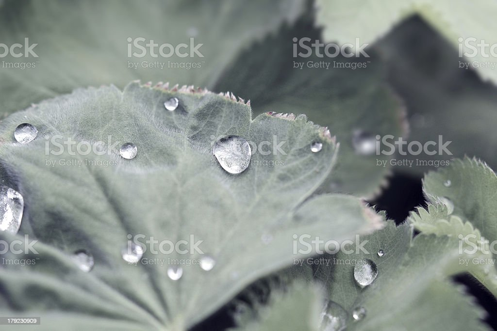 Water drops dew on low saturation leaf stock photo