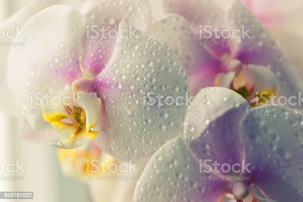 Water drops falling on white orchid picture id843181032?b=1&k=6&m=843181032&s=612x612&h=cpcy317gh0sxh mbonqmyvizmtabvo5qfkaosvsi8dm=