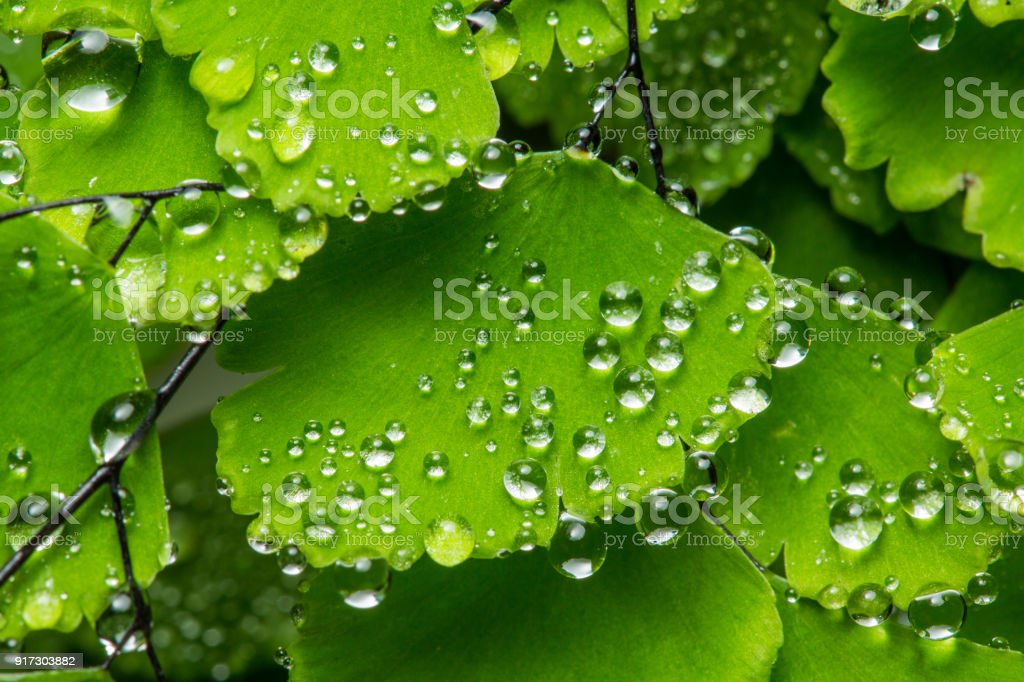 Water Drops Green Background Wallpaper Stock Photo - Download
