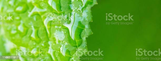 Water drops on a green leaf picture id1166511917?b=1&k=6&m=1166511917&s=612x612&h=4zbjpudczqnait 8yyn8b1asxgz1hmysnlpirskmtyu=