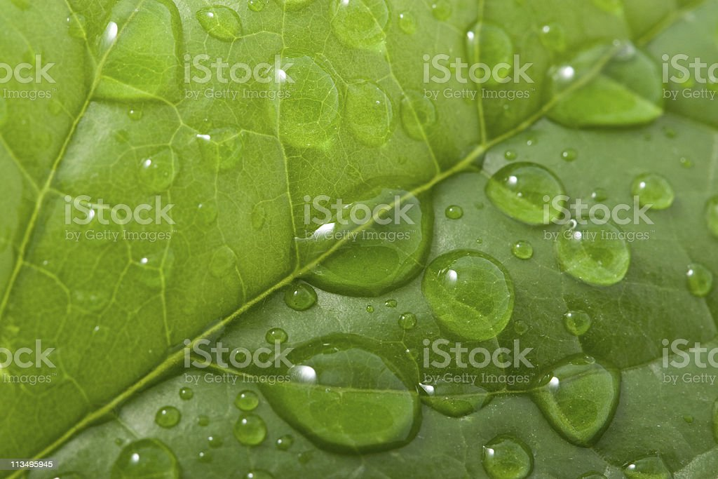 water drops on a leaf royalty-free stock photo