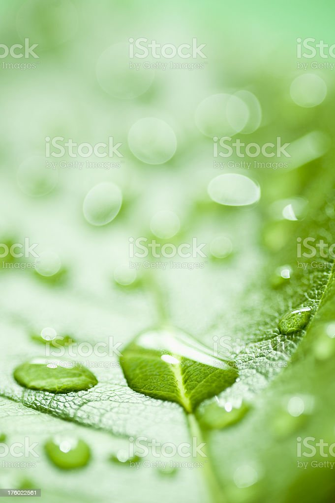 Water drops on a vibrantly green leaf. stock photo