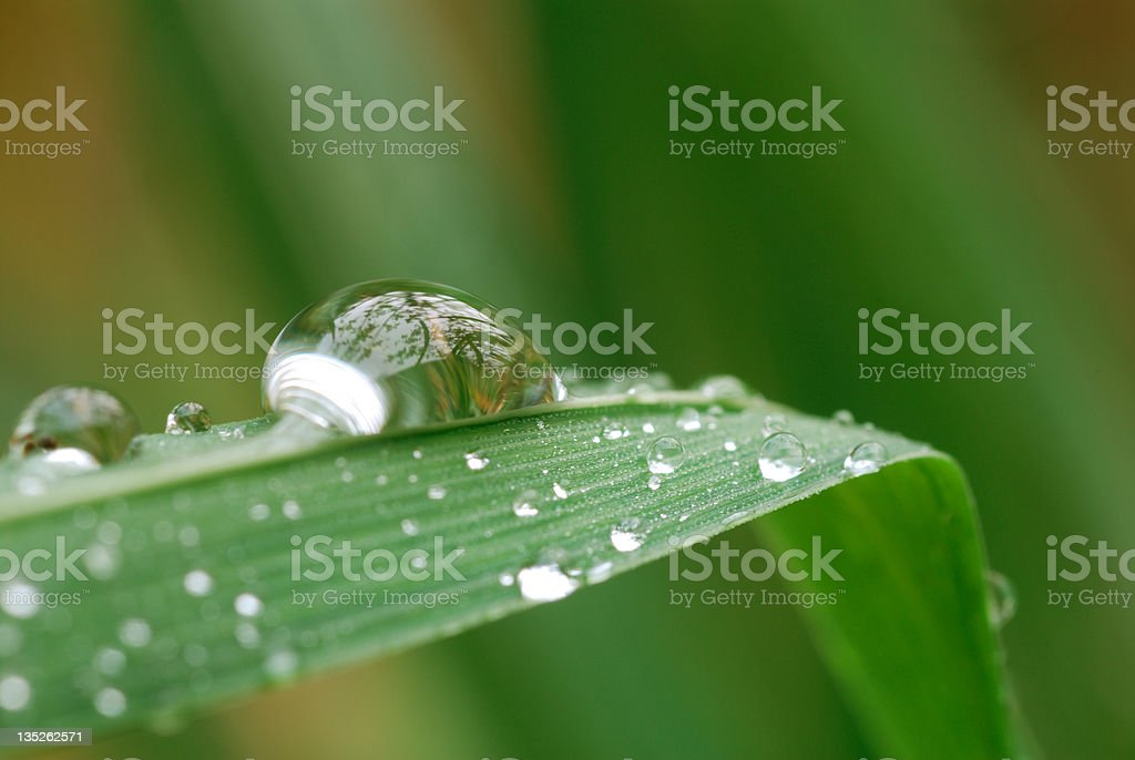Water drops on grass blade stock photo