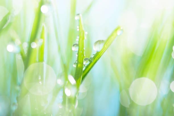 雨滴の緑の芝生 ストックフォト