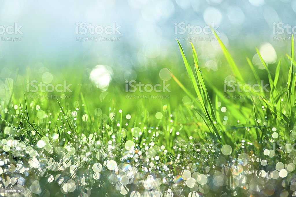 Water drops on green grass - shallow DOF - Royalty-free Abstract Stock Photo