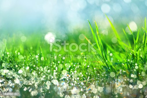 Water drops on green grass - shallow DOF