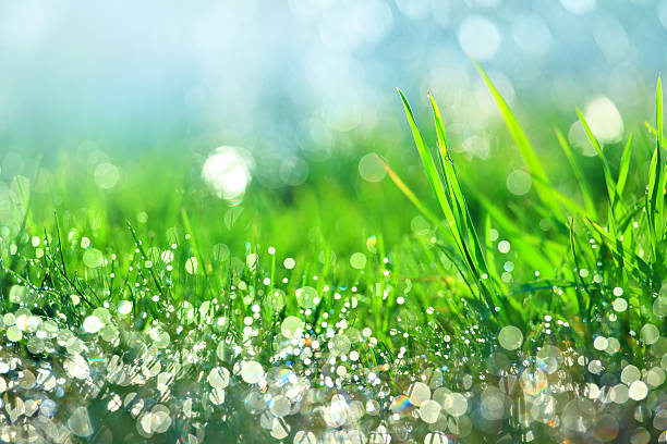 Water drops on green grass - shallow DOF stock photo
