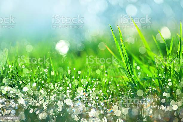 Photo of Water drops on green grass - shallow DOF