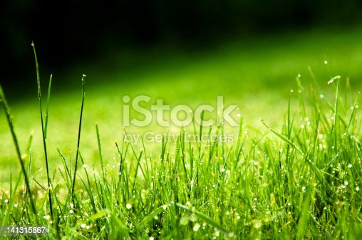 672372726istockphoto Water Drops on green grass with black background 141315867