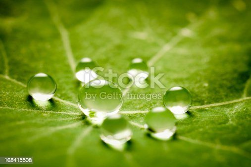 Macro 3X of water drops on a green leaf. Tiny depth of field.