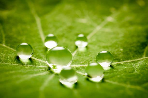 雨滴緑の葉 - ハスの葉 ストックフォトと画像