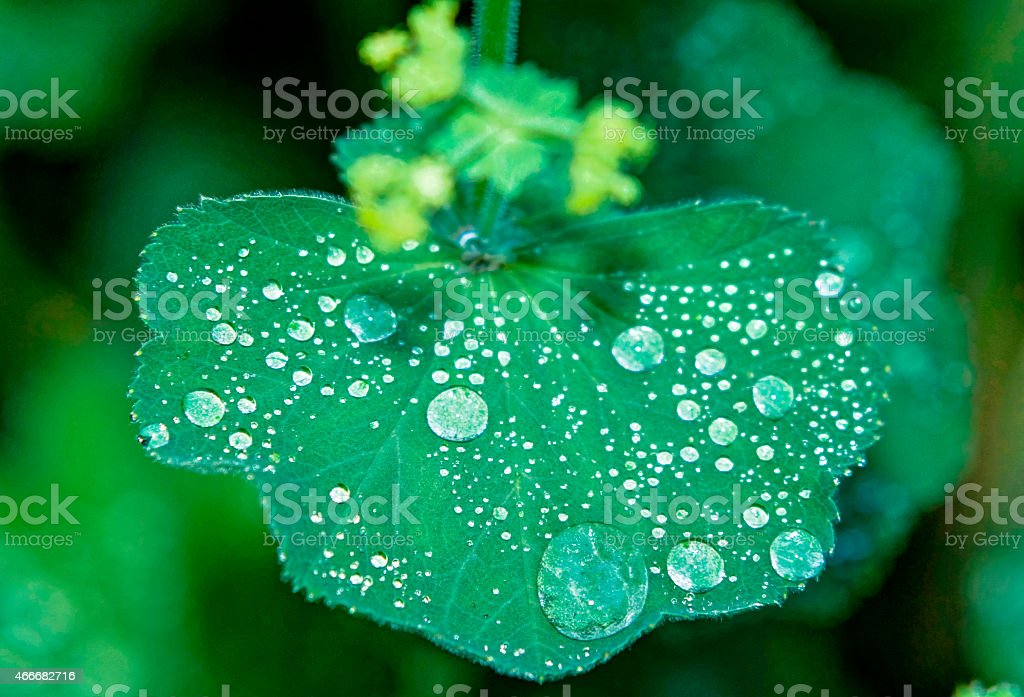 Water drops on Green Plant stock photo