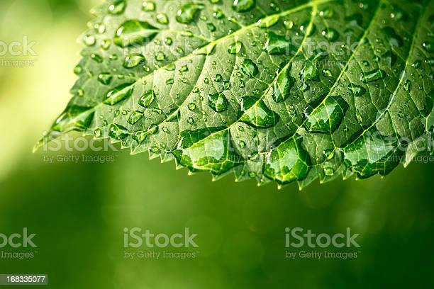 Photo of Water drops on leaf in sunshine