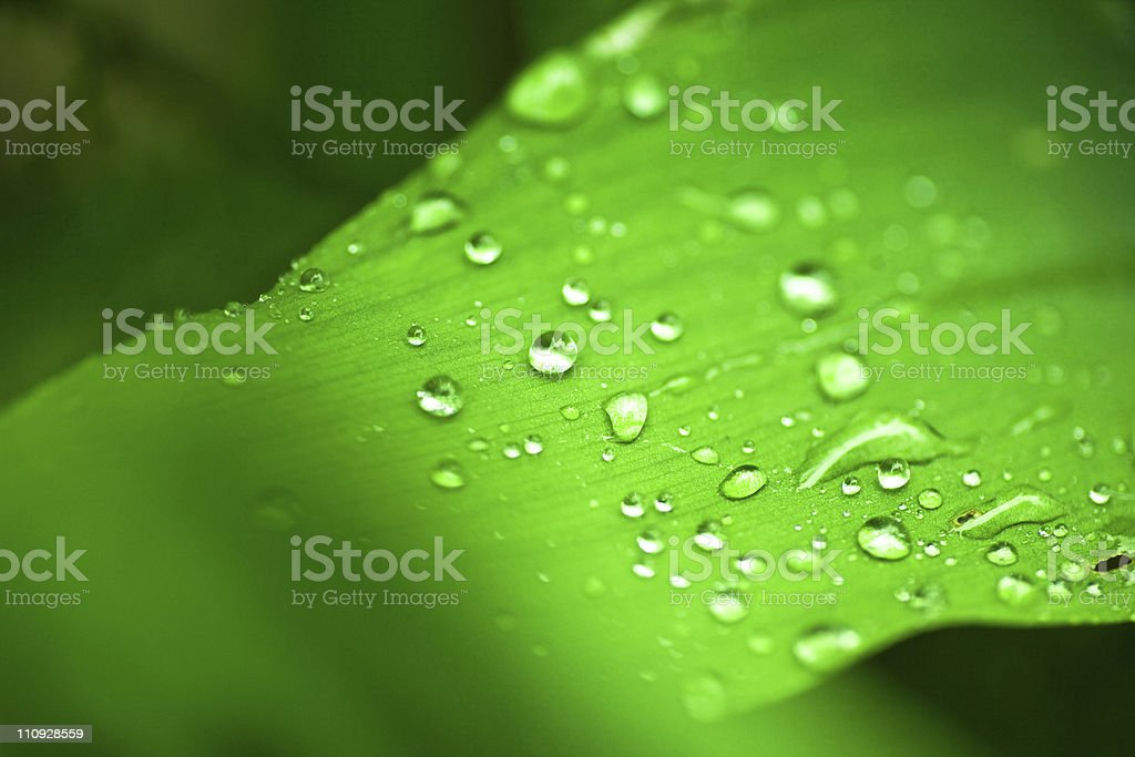 Water drops on leaf royalty-free stock photo