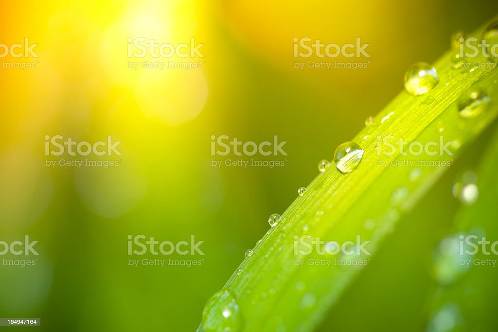 Water drops on leaf with sunbeam in background stock photo