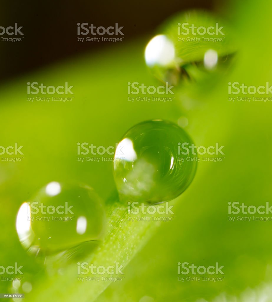 Water drops on the fresh green shoot foto stock royalty-free