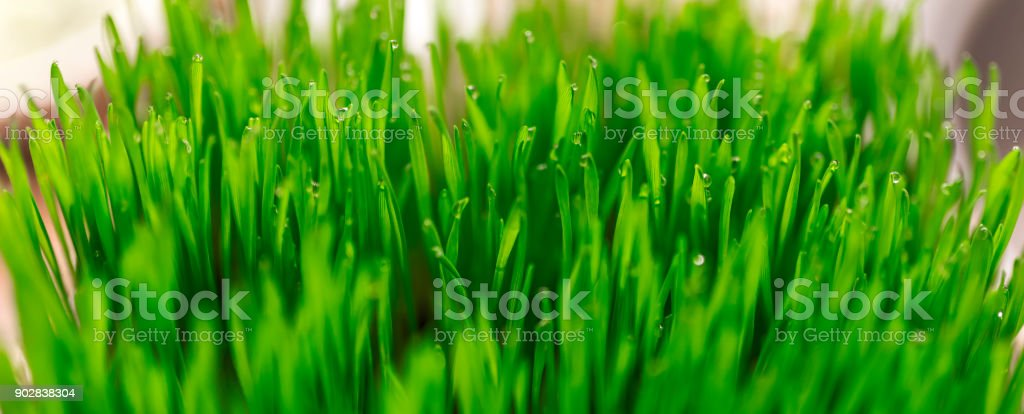 Water drops on the green grass. stock photo