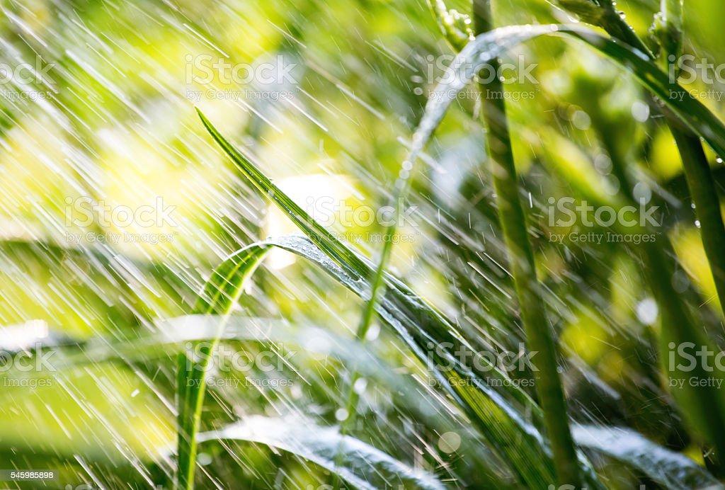 Wasser fällt auf hellgrüne Vegetation - Lizenzfrei Bewässerungsanlage Stock-Foto