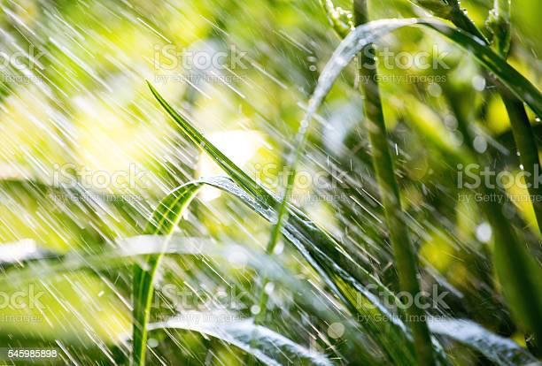 Wasser Fällt Auf Hellgrüne Vegetation Stockfoto und mehr Bilder von Bewässerungsanlage