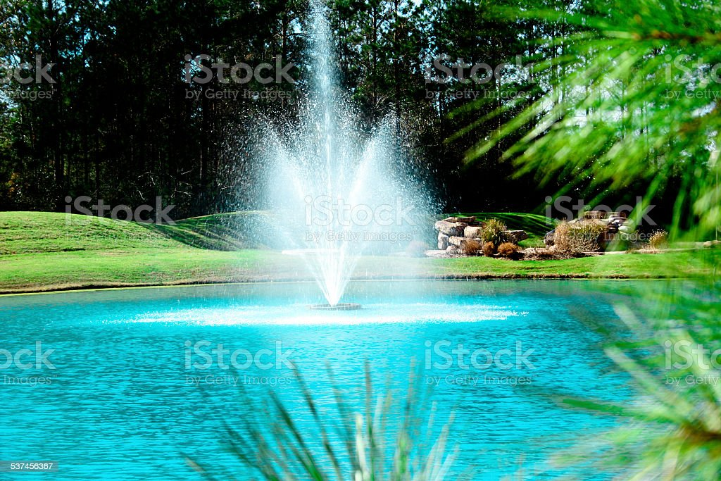 Pine tree in foreground of this spring grounds scene. Water feature...