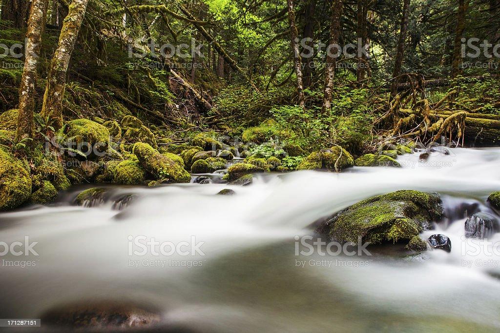Water flowing in creek stock photo