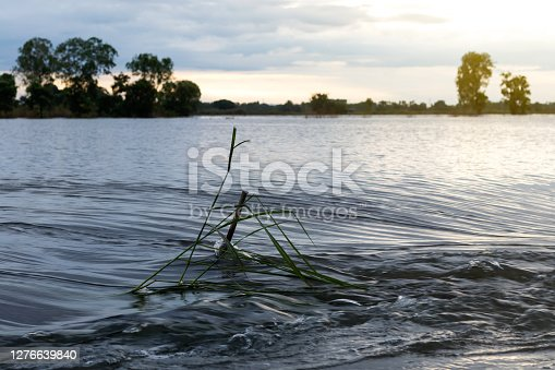 Low perspective views, rapid flooding through morning grass in rural areas.