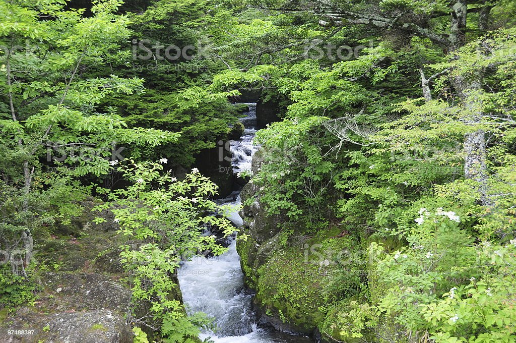 Water Flows Through Forest Gorge royalty-free stock photo