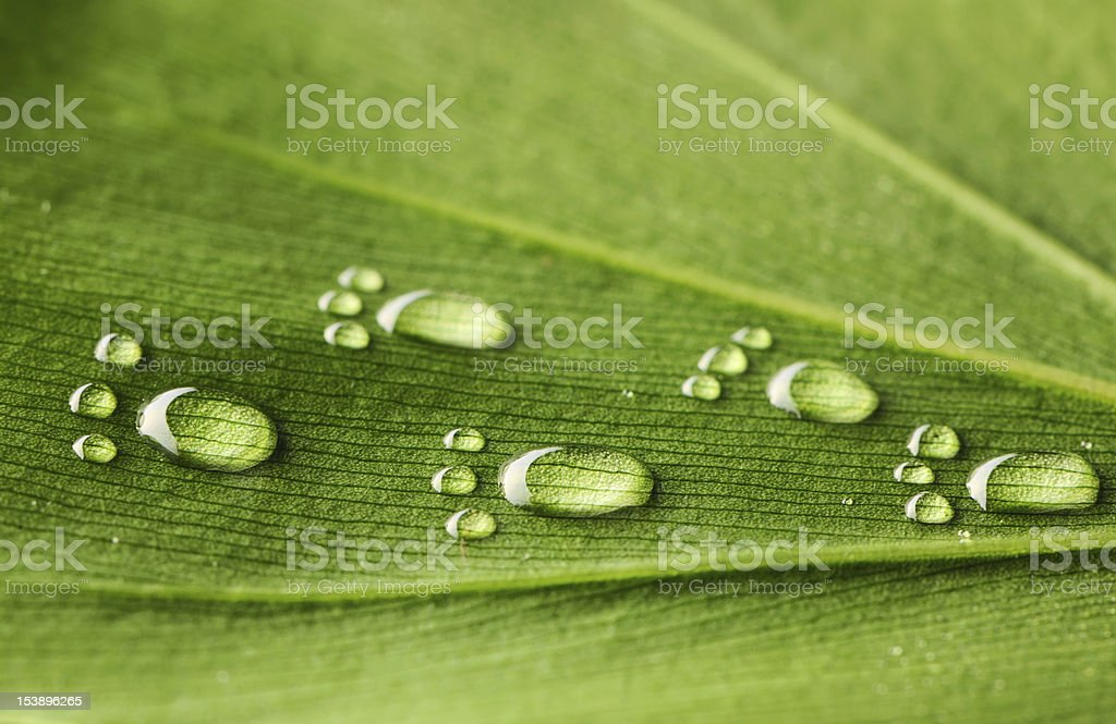 Water footprints on leaf royalty-free stock photo