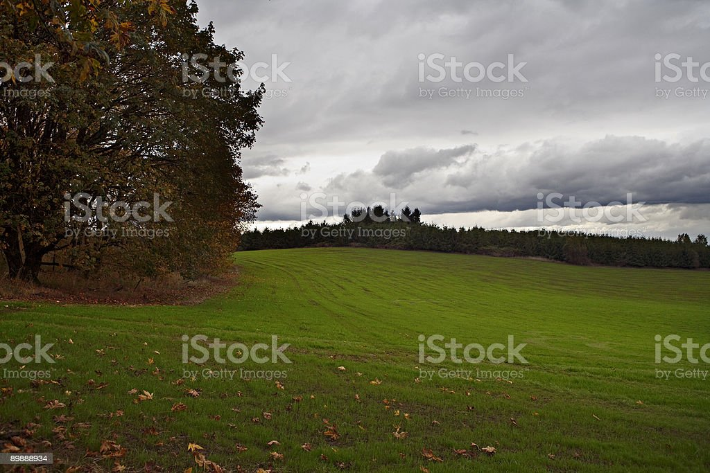Water for greening royalty-free stock photo