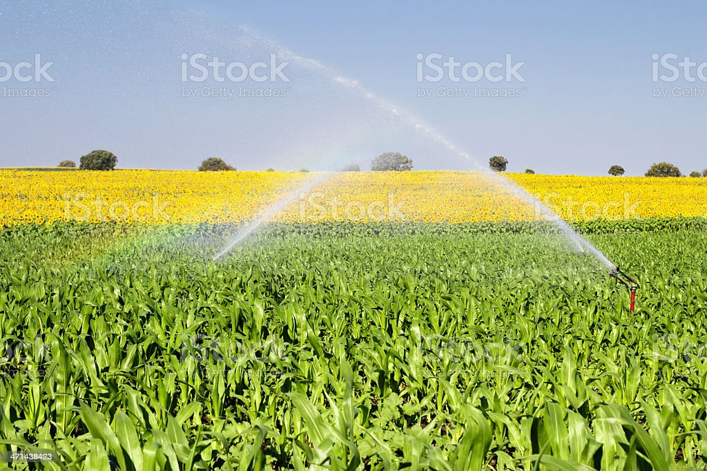Water for the agriculture field stock photo