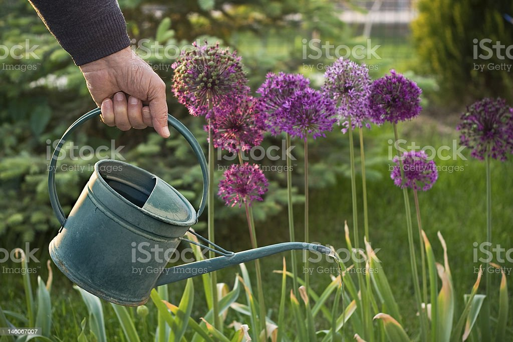 Water For The Flowers. stock photo
