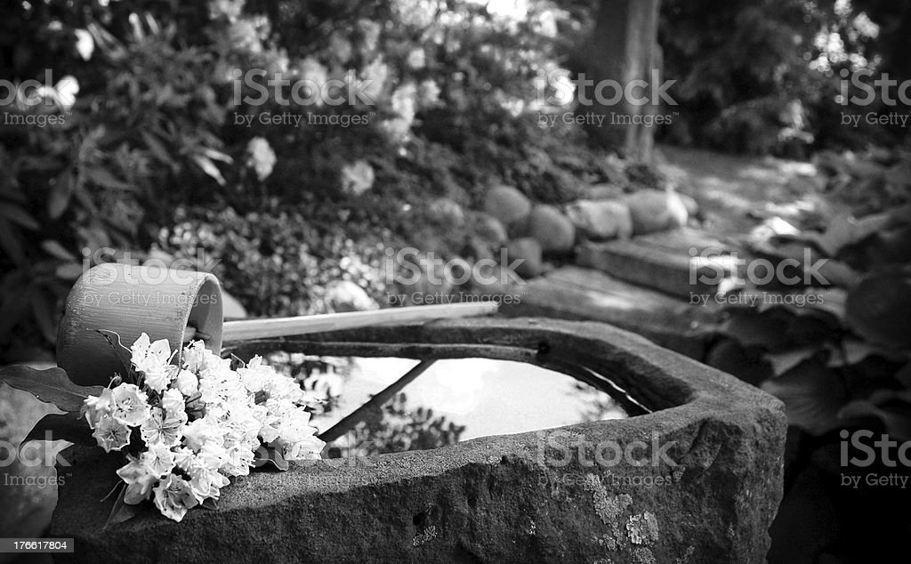 Water garden black and white royalty-free stock photo