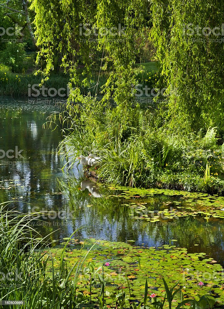 Water Garden in the Afternoon royalty-free stock photo