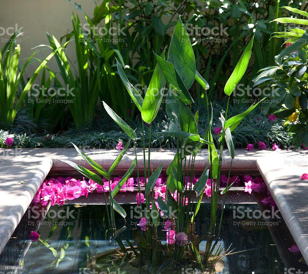 Water garden royalty-free stock photo
