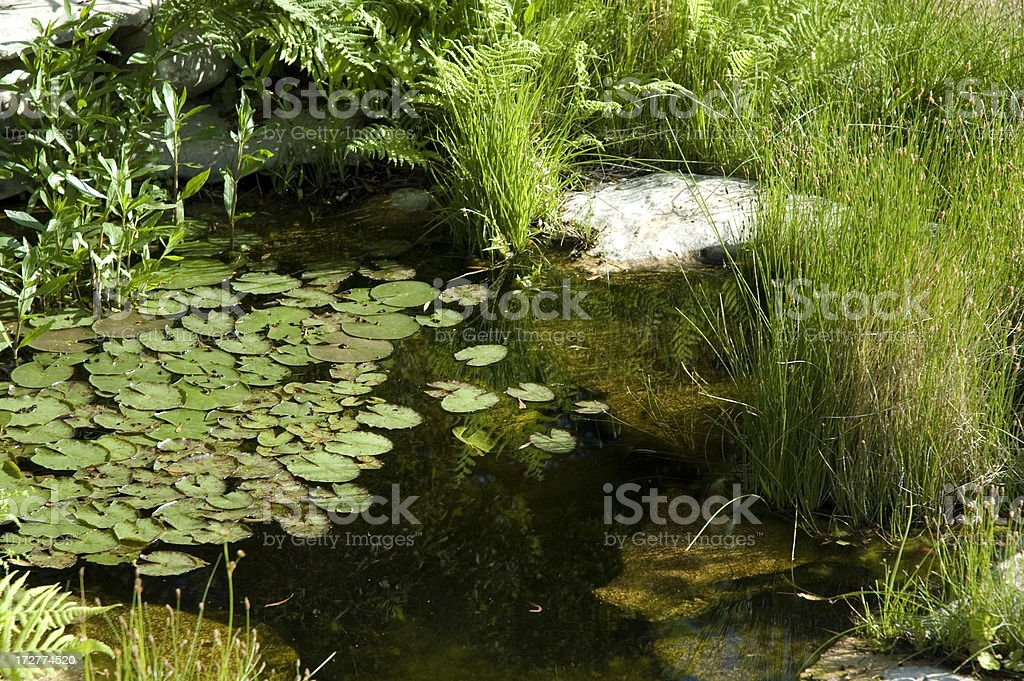 Water Garden royalty-free stock photo