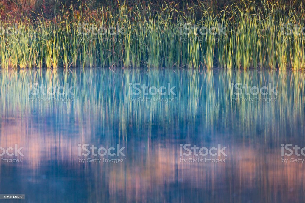 Water grass by the river and reflections in the river stock photo