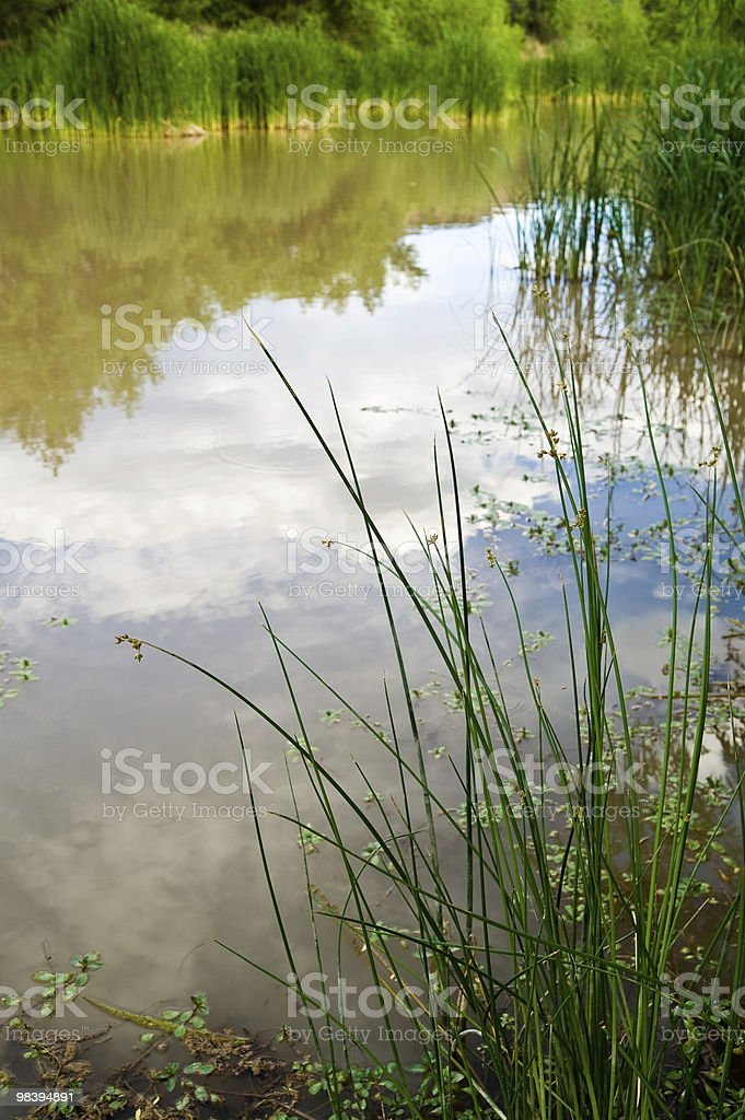 Water grass royalty-free stock photo